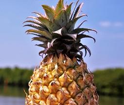 /Pulseem/ClientImages/5447///pineapple_s.jpg