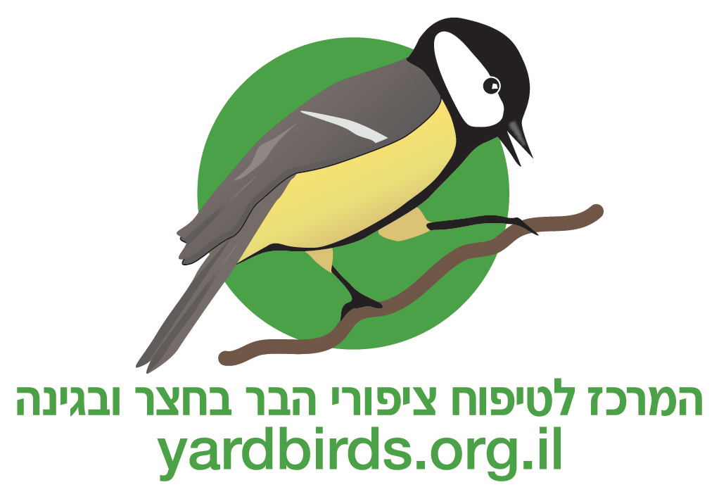/Pulseem/ClientImages/627///yardbirdslogo.jpg