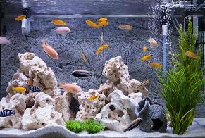 /Pulseem/ClientImages/9859///aquarium_fish_2.jpg
